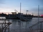Hochwasser am 10.1.11 - Rheinnixe