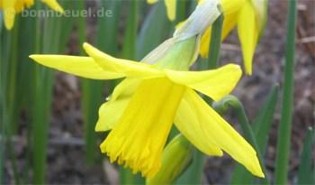 Frühling in Bonn Beuel
