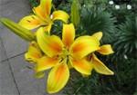 Blumenfest Beuel
