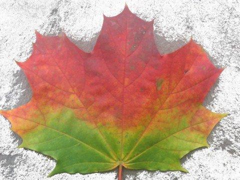 Herbst 2008 Bonn Beuel