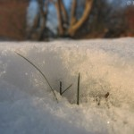 Das Leben unterm Schnee