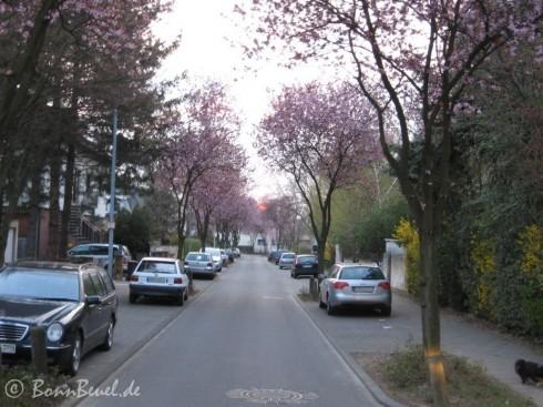 Ernst-Moritz-Arndt-Straße - 06.04.2009