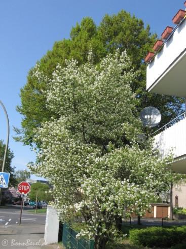 Limpericher Straße / Goetheallee