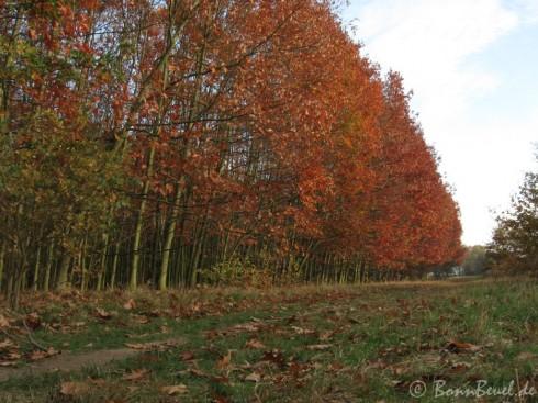 Projekt 52: Goldener Herbst 2009 - St. Augustin