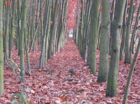 Projekt 52: Ich glaub ich steh im Wald - 31.10.09