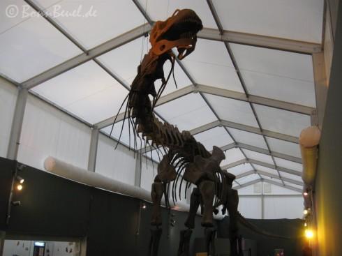 Argentinosaurus im Museum König Bonn - 28.12.09