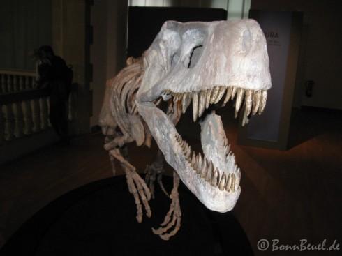 Frengueellisaurus im Museum König - 28.12.09