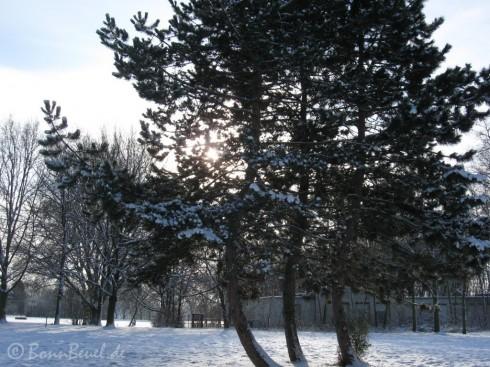 schneebedeckte Bäume am Rhein