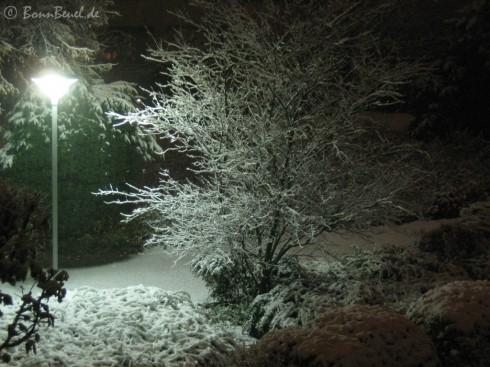 26.11.10 Winter